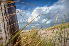 Golvend duingras in de wind met witte en grijze onweerswolken o royalty-vrije stock foto