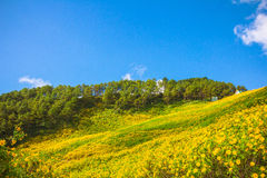 Golvend geel bloemgebied met strepen en golvend abstract landschap Royalty-vrije Stock Afbeeldingen