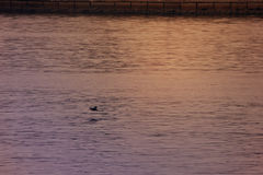 Golvend Water van Overzeese Achtergrond, Doubai, de V.A.E op 21 Juli 2017 Stock Afbeeldingen