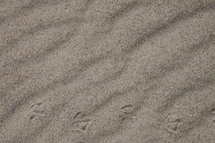 Golvend zand met vogelvoetafdrukken Royalty-vrije Stock Foto