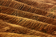 Golvende bruine heuveltjes, zeuggebied, landbouwlandschap, aardtapijt, Toscanië, Italië Stock Foto's