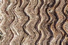 Golvende die lijnen op een boomschors worden gebaseerd royalty-vrije stock afbeeldingen