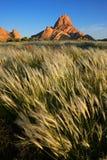 Golvende grassen, Namibië royalty-vrije stock foto