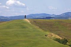 Golvende heuvels van Siena, Kreta, Toscanië Royalty-vrije Stock Foto's