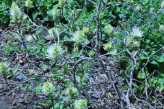 Golvende lichtgroene pom poms ziet deze installatie door zijn laatste dagen stock afbeelding