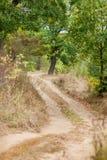 Golvende plattelandsweg in het eiken bos bij de herfst stock fotografie