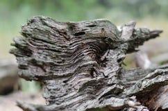 Golvende structuur van een oude boom Close-up Selectieve nadruk royalty-vrije stock foto