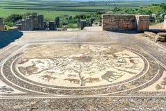 Golvmosaiken i det Orpfeus huset i romare fördärvar, den forntida romerska staden av Volubilis morocco Fotografering för Bildbyråer