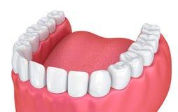 Goma e dentes da boca Fotografia de Stock Royalty Free