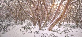 Gomas de nieve Imágenes de archivo libres de regalías