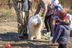 GOMEL, BELARUS - 9 April 2017: A great kind dog gets acquainted with people in the nature Royalty Free Stock Image