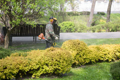 GOMEL, BELARUS - 29 April 2017: Workers of the city park mow the grass royalty free stock image