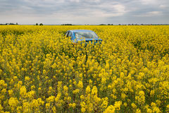 GOMEL, BELARUS - May 24, 2017: the blue car is parked on the rapeseed field. Royalty Free Stock Images
