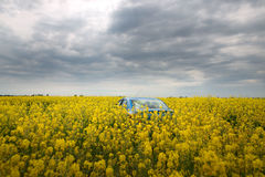 GOMEL, BELARUS - May 24, 2017: the blue car is parked on the rapeseed field. Stock Photo
