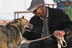 Gomel, Belarus - May 27: Exhibition of hunting dogs. competitions in conformation May 27, 2013 in Gomel, Belarus .. Stock Image