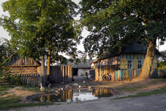 Gomel Białoruś, Lipiec, - 10, 2016: Dom w wiosce pasa w podwórka drobiu W Gomel, Białoruś Obraz Stock