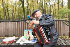 Gomel Białoruś, PAŹDZIERNIK, - 25, 2015: Ulica muzyk bawić się akordeon w parku obrazy royalty free
