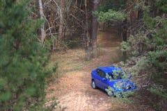 GOMEL, BIELORRÚSSIA - 8 de abril de 2017: O azul de Renault Logan do carro estacionou em uma floresta do pinho foto de stock royalty free