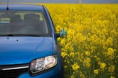 GOMEL, BIELORRÚSSIA - 24 de maio de 2017: o carro azul é estacionado no campo da colza Fotografia de Stock
