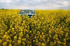 GOMEL, BIELORRÚSSIA - 24 de maio de 2017: o carro azul é estacionado no campo da colza Imagens de Stock