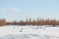 GOMEL, Bielorrússia - 24 de março de 2018: Pesca do inverno Pescadores nos peixes da captura do gelo Foto de Stock Royalty Free