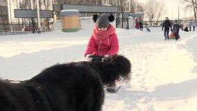 GOMEL, BIELORRUSIA - 20 DE ENERO DE 2019: un hombre rueda a un niño en un trineo en trineo del perro almacen de video