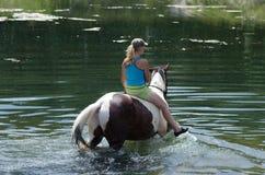 GOMEL, BIELORRUSIA - 24 DE JUNIO DE 2013: Baño de caballos en el lago Imágenes de archivo libres de regalías