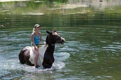 GOMEL, BIELORRUSIA - 24 DE JUNIO DE 2013: Baño de caballos en el lago Imagenes de archivo