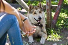 Gomel, Bielorrusia - 27 de mayo: Exposición de los perros de caza competencias en conformación el 27 de mayo de 2013 en Gomel, Bi foto de archivo libre de regalías