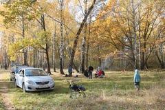Gomel, Bielorrusia - 12 de octubre de 2014: Meriende en el campo en una arboleda del abedul con los coches parqueados Fotos de archivo libres de regalías
