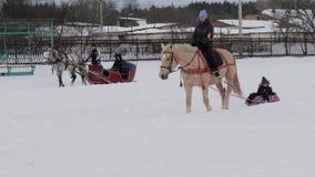 GOMEL VITRYSSLAND - JANUARI 19, 2019: en ryttare på en häst rullar ett barn på en släde på rör stock video