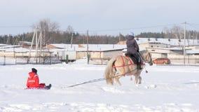 GOMEL VITRYSSLAND - JANUARI 19, 2019: en ryttare på en häst rullar ett barn på en släde på rör arkivfilmer