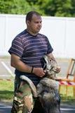 Gomel Vitryssland - Maj 27: Utställning av jakthundkapplöpning konkurrenser i gestaltning Maj 27, 2013 i Gomel, Vitryssland Arkivbild