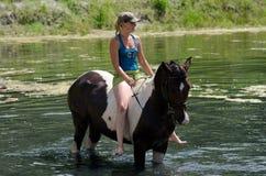GOMEL, WEISSRUSSLAND - 24. JUNI 2013: Baden von Pferden im See Stockfotos