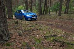 GOMEL, WEISSRUSSLAND - 24. MAI 2017: Blaues Auto RENO LOGANs parkte in einem dunklen Kiefernwald Stockfotos