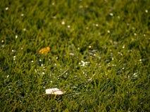 Gomma cruda del tappeto erboso di calcio di inverno Vista del primo piano del campo di erba artificiale sul campo da giuoco di ca Fotografie Stock