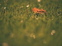 Gomma cruda del tappeto erboso di calcio di inverno Vista del primo piano del campo di erba artificiale sul campo da giuoco di ca Fotografia Stock