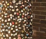 Gomma da masticare su Palo a Charleston, Sc Fotografia Stock Libera da Diritti