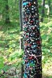 Gomma da masticare sull'albero Immagini Stock Libere da Diritti