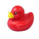 Gomma ducky Immagini Stock