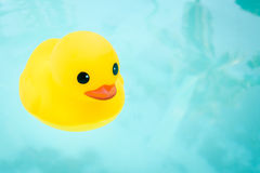 Gomma Ducky Immagine Stock
