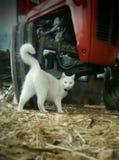 Gomme bianche del trattore e del gatto Fotografie Stock