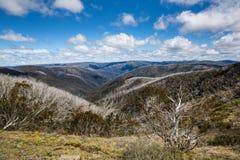 Gomme di neve nelle alpi vittoriane, Victoria, Australia fotografia stock
