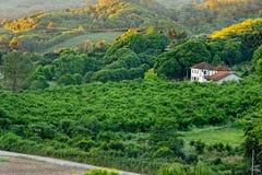goncalves страны bento расквартировывают плантацию Стоковое Изображение RF