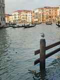 Gondola and Buildings Royalty Free Stock Images