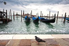 Gondolas in the early morning pigeon Stock Photos