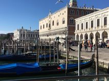 Gondolas and a flying seagull royalty free stock photography