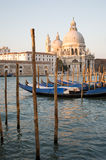 Gondolas in Venice. A row of Gondolas with St Salut in the background, Venice Royalty Free Stock Photo