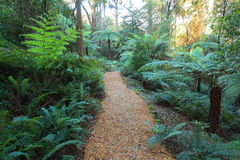 Gondwana Rainforest With Woodchip Path Royalty Free Stock Photos