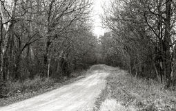Gone Country. Black and white landscape with a dirt country road lined on either side with bare trees winding off in the distance Stock Photography